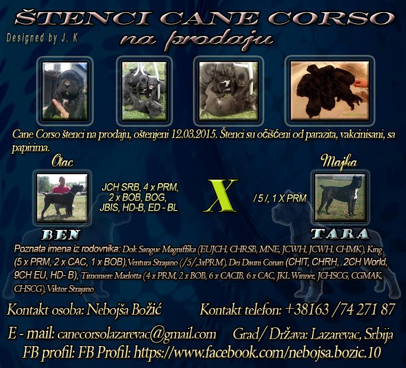 Oglas - Cane Corso �tenci vrhunskog porekla na prodaju - 250.00 ...