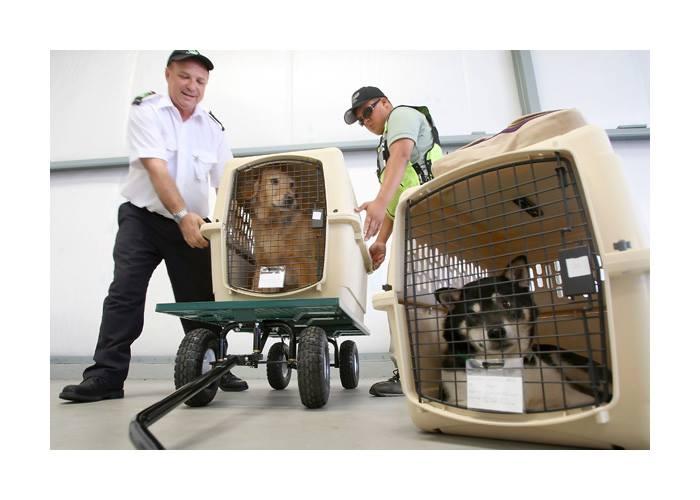 Avio prevoz zivih zivotinja