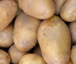 Krompir Agrija