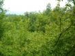 biljana grgić